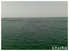 charfia28240.jpg