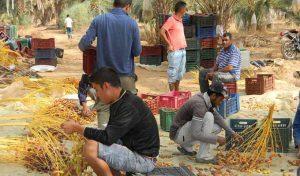 jemna_tunisie_102016