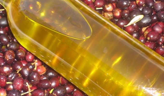 Huile d'olives : Les prévisions tablent sur une baisse de 40% de la récolte  2020-2021 | Webmanagercenter