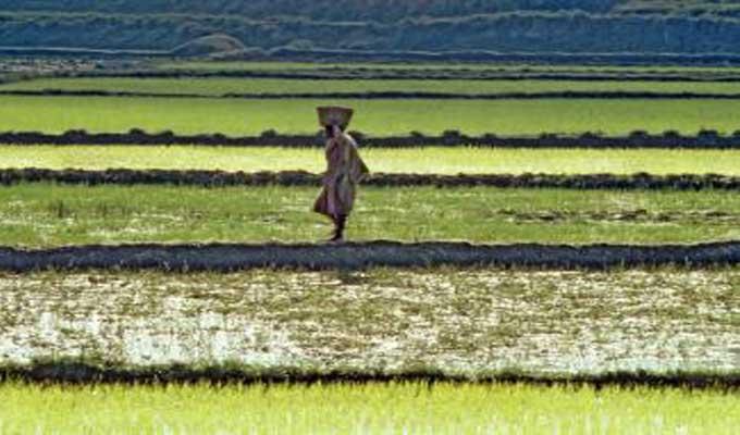 Le FIDA et la FAO s'associent pour soutenir l'agriculture familiale dans la région MENA
